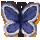 butterflysb