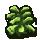 cabbage0